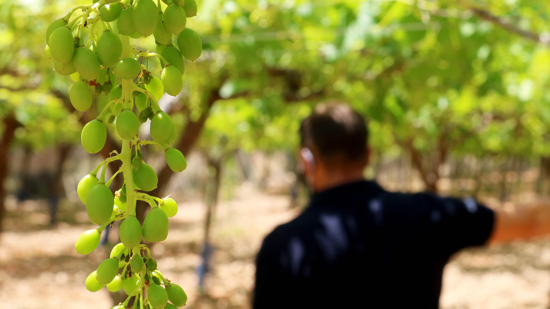 Visita al campo de ensayo de uva de mesa en Hondón de las Nieves #FruitCare