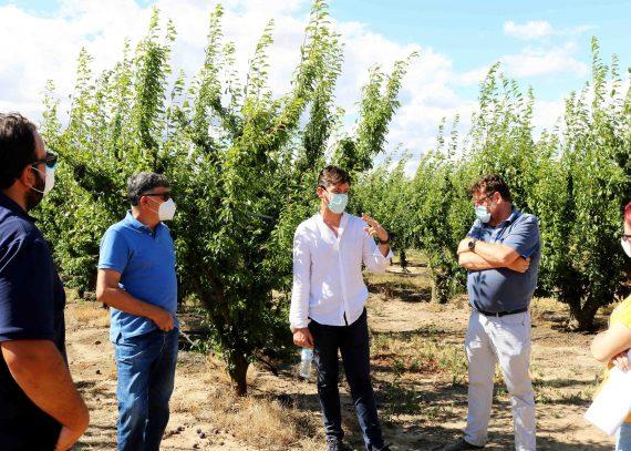 Visita al campo de ensayo de fruta de hueso en Mérida